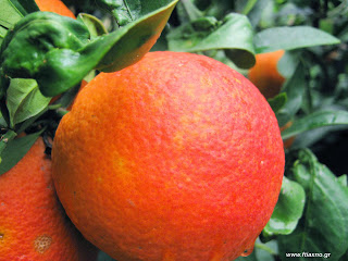 Πορτοκαλοθεραπεία